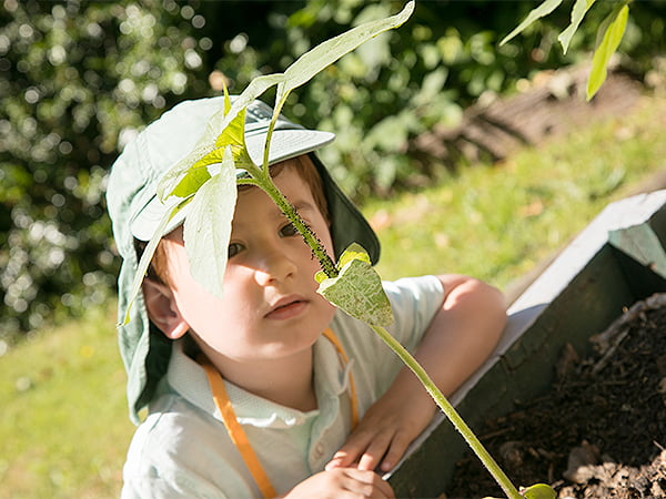 Boy looking at a plant grown from a seed